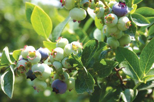 Ward's Berry Farm - Image 5