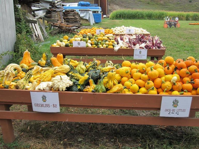 McMillan Farms - Lots of gourds, small pumpkins and beautiful ornamental corn.