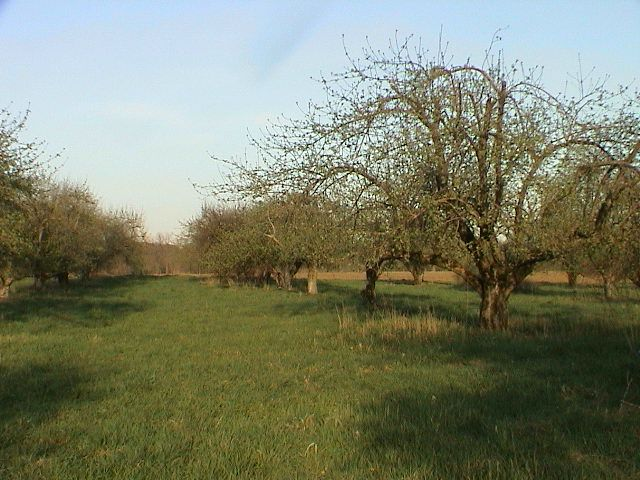 Orchard Beach Farm - Large trees on grass.