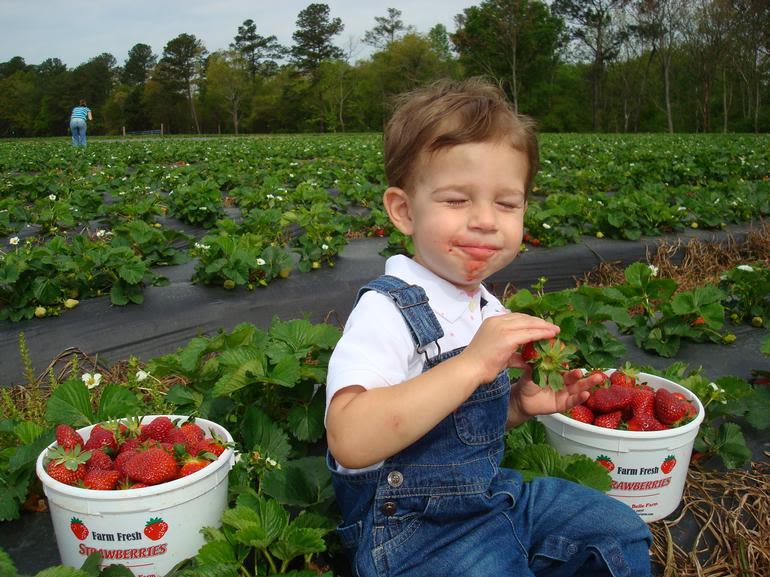 Southern Belle Farm - Yum Yum Fresh Strawberries from Southern Belle Farm! Nothin' beats em'!