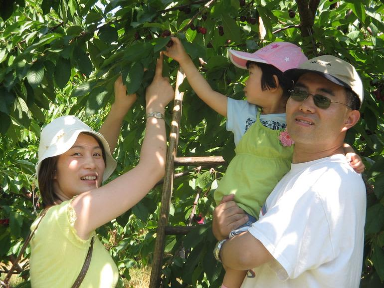 Prospect Hill Orchards-Cherries - Image 2