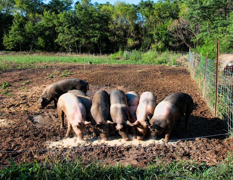 Full of Graze Farm - Image 0