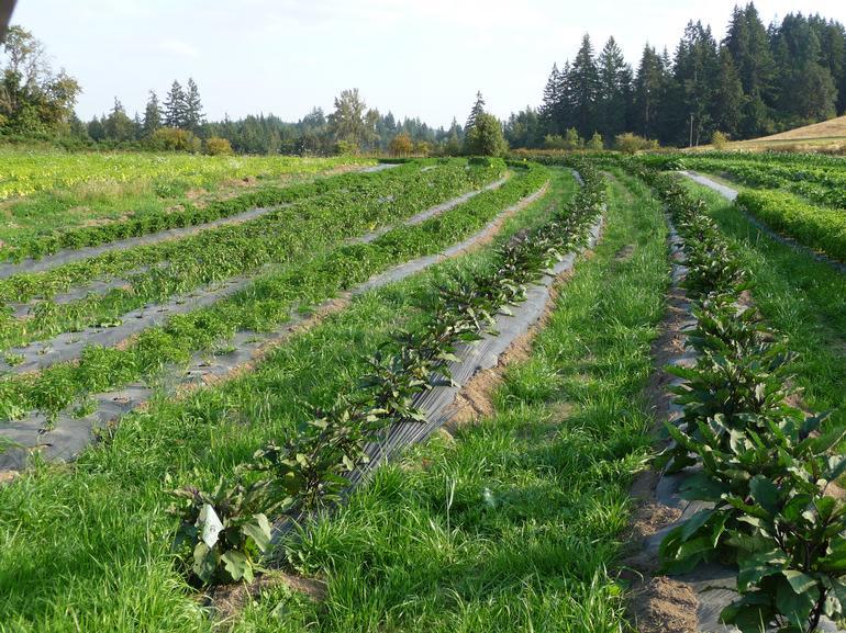 Karam Farm And Garden - Image 1
