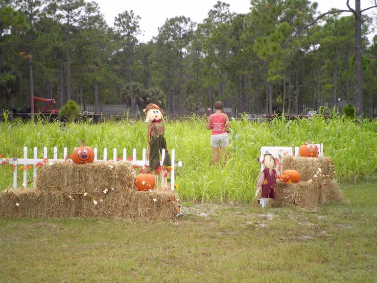 Carousel Party Acres - Corn Maze
