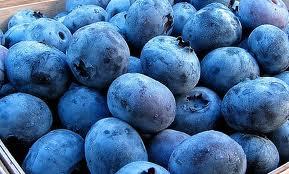 Meadow Mist Farm - Pesticide Free Sweet Blueberries