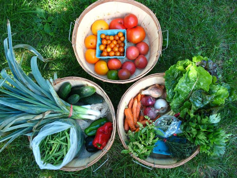Hartwood Farm - Some of our CSA share veggies!