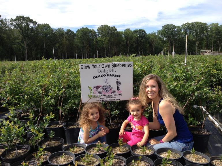 DiMeo Farms & Blueberry Plants Nursery - This mom brought her two daughters to DiMeo blueberry farms and Non-GMO blueberry plant nursery dlr., to teach the girls how to grow blueberries at home with the best 100% natural blueberry bushes for only $10 from REAL blueberry farmers. STILL TIME TO ORDER - CALL NOW: (609) 561-5905