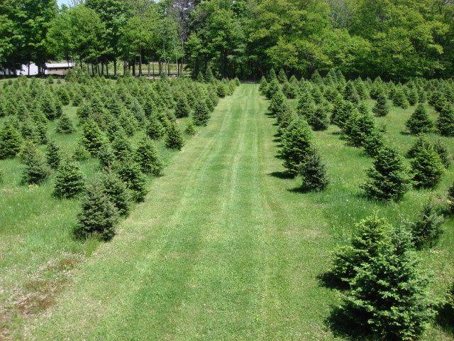 Goulden Ridge Farm - Image 6