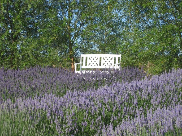 Blue Mountain Lavender Farm - Sit and relax a while at Blue Mountain Lavender Farm.