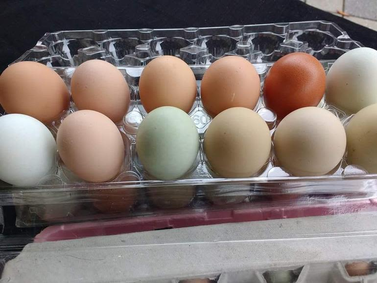 State of Harmony Farm - Organic eggs