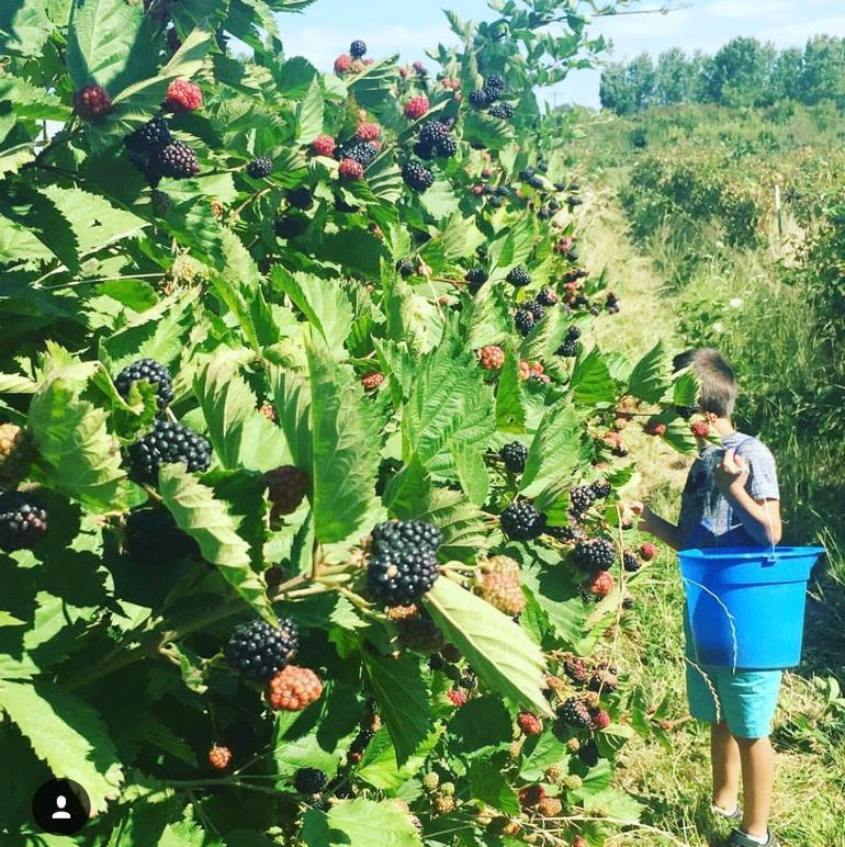 Bella Organic Farm - Image 28