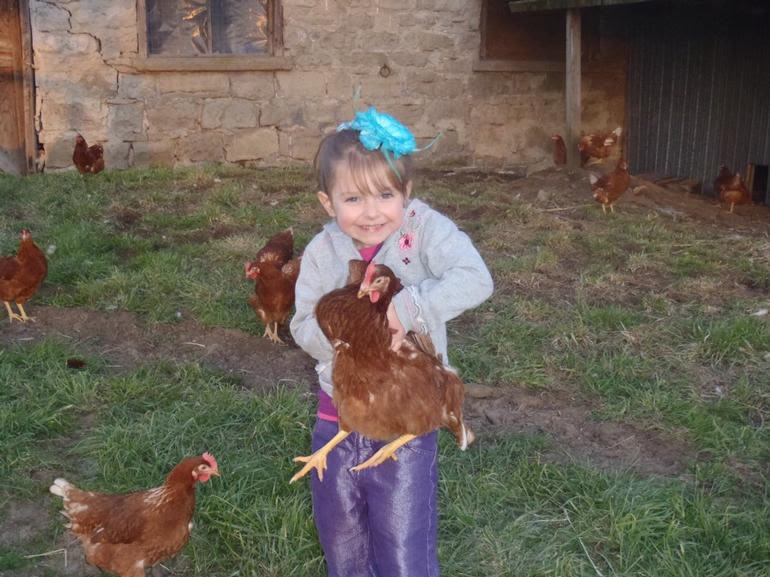 Our Father's Farm - More chickens