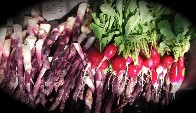 Boulder Belt Eco-Farm - red radishes and purple asparagus