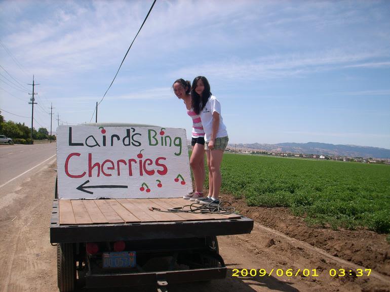 Laird's Bing Cherries - Image 0