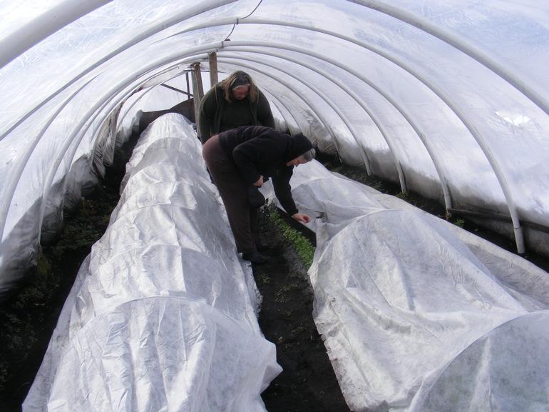 W Rogowski Farm - hi tunnel tour and lunch