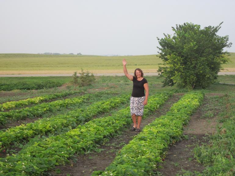 """Hazy Hollow Acres - A """"Hello"""" from the strawberry patch"""