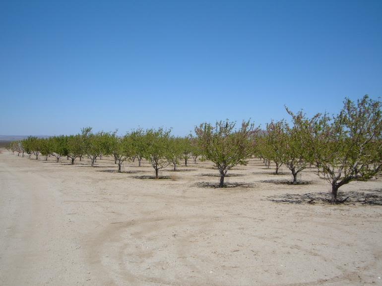 Brian Ranch Airport U*Pick Orchard - Image 0