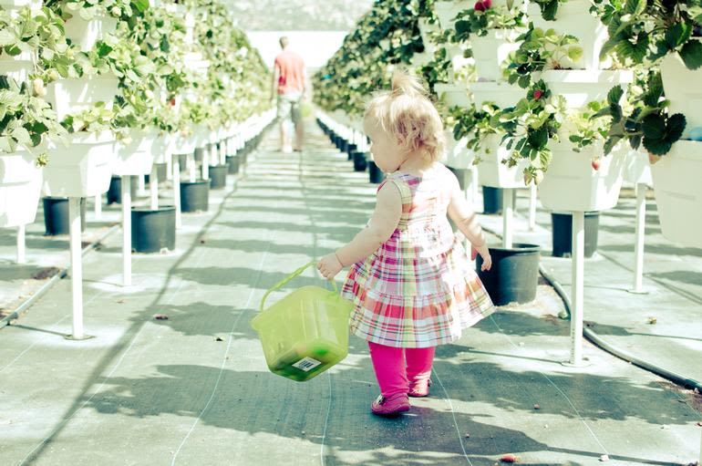 Temecula Valley Strawberry Farms - Great place for all ages. Our user friendly system is great for everyone!