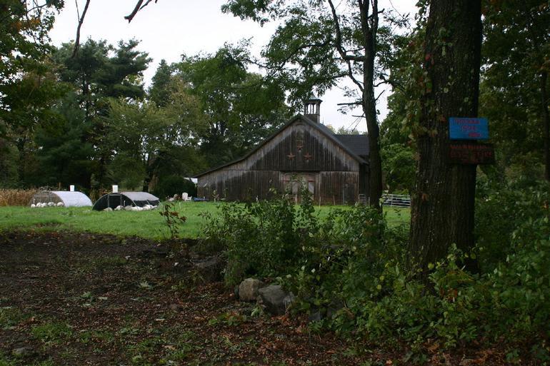 Meadow Mist Farm - Pastured Turkeys at MMF