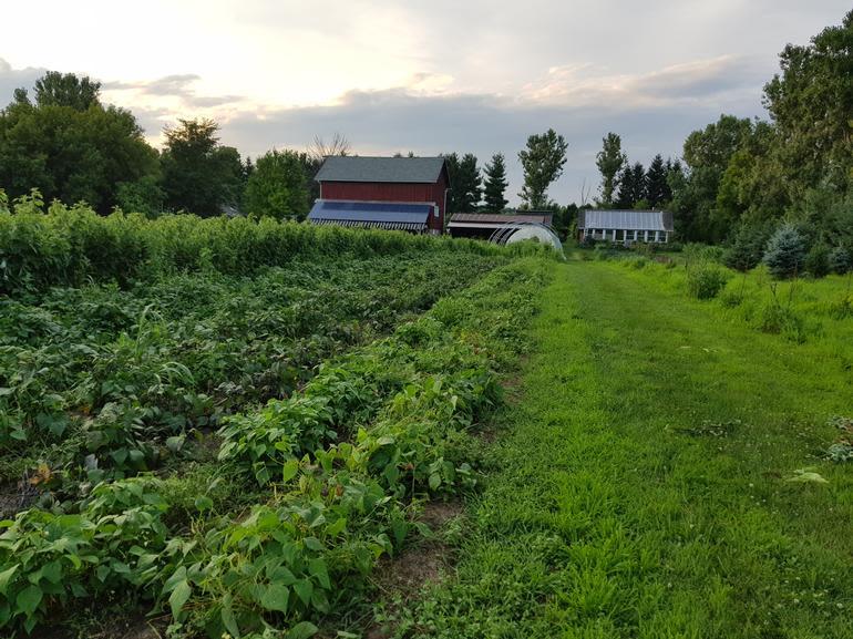 Blue Skies Farm - Image 3