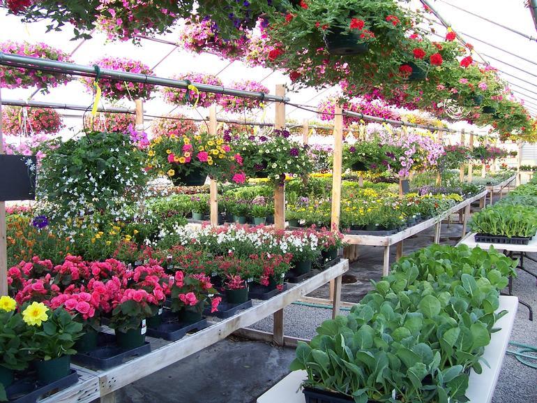 Brick House Acres - Vibrant, Healthy Plants!