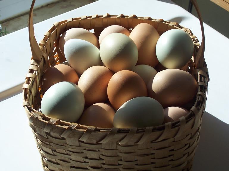 Brick House Acres - Fresh eggs