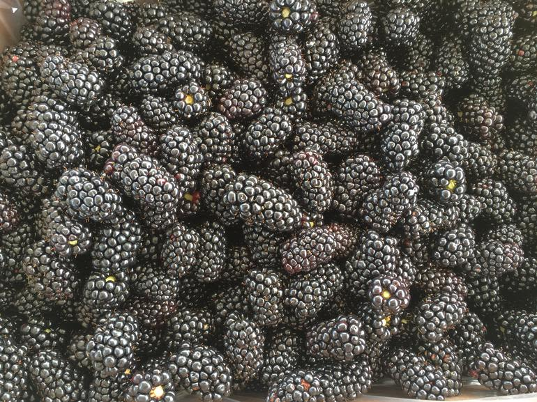Tanglewood Berry Farm - bulk blackberries