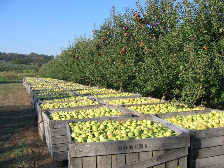 Paulus Orchards - Apples, Apples, and more apples.  Come to the orchard for just picked apples!