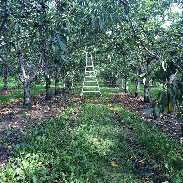 Peter's Orchard - Image 15