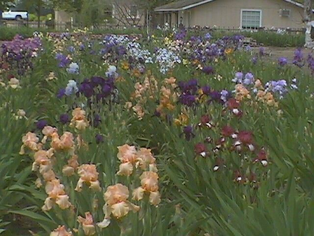 Rancho Notso Grande - Sea of Iris