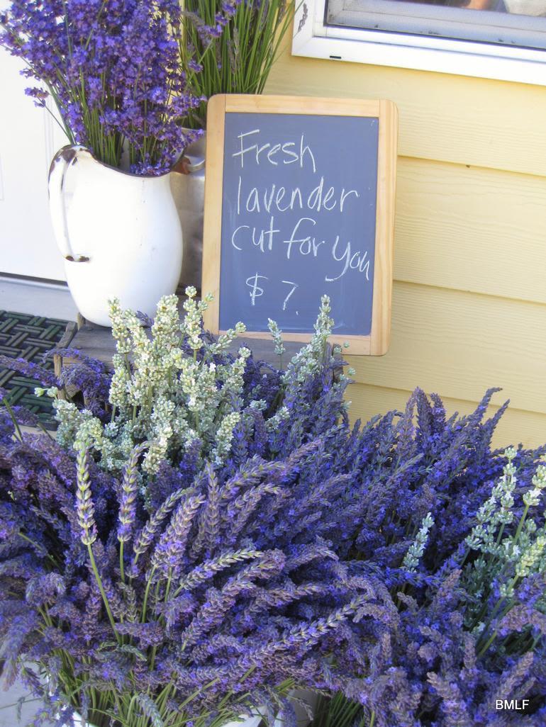 Blue Mountain Lavender Farm - Image 1