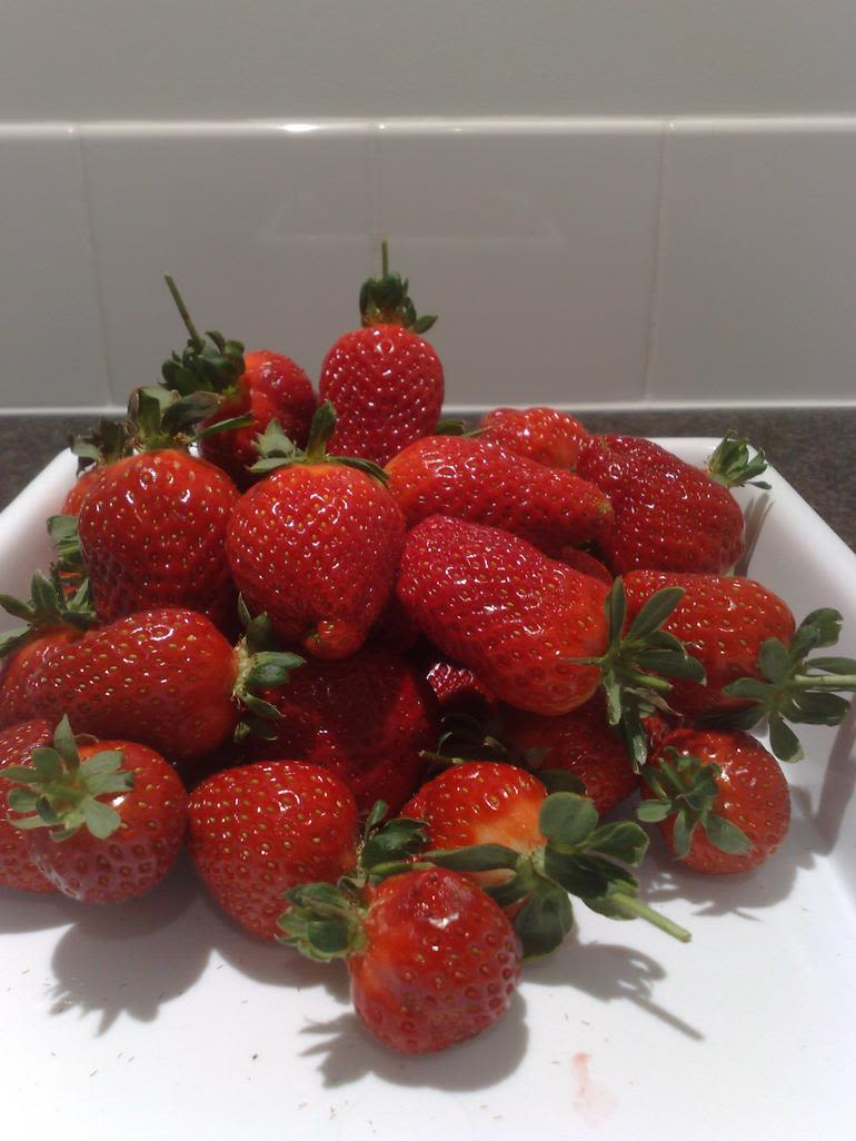 Hedgerows Hydroponic Strawberries - Image 5