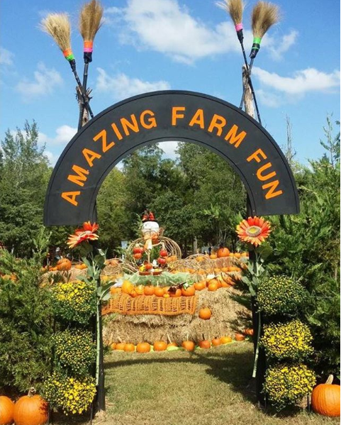 Amazing Farm Fun at Ticonderoga - September 22nd - November 4th we are celebrating our Fall Pumpkin Festival! Take a break from your busy schedule and enjoy a variety of activities from hayrides to huge jumping pillows to fire pits for roasting marshmallows and s'mores! Visit amazingfarmfun.com to view all the fun we have to offer!