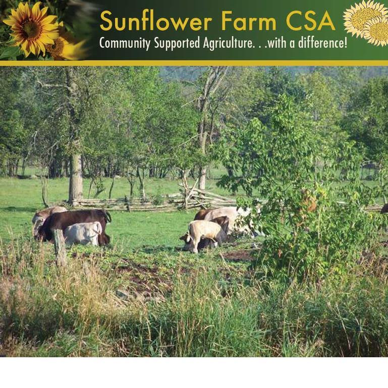 Sunflower Farm CSA - Image 0
