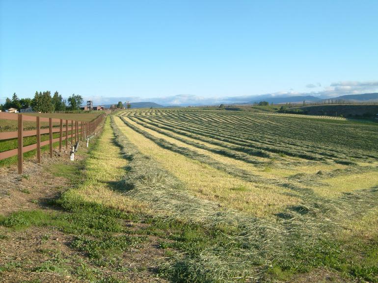 Windy N Ranch - Image 9