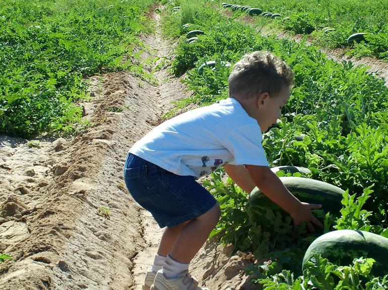 Vertuccio Farms - Image 4