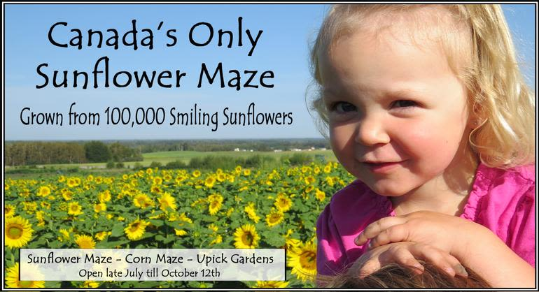Eagle Creek Farms - Sunflower Maze Open End of July to Mid October.  This is Canadas only Sunflower Maze and is grown without any synthetic herbicides or fertilizers.