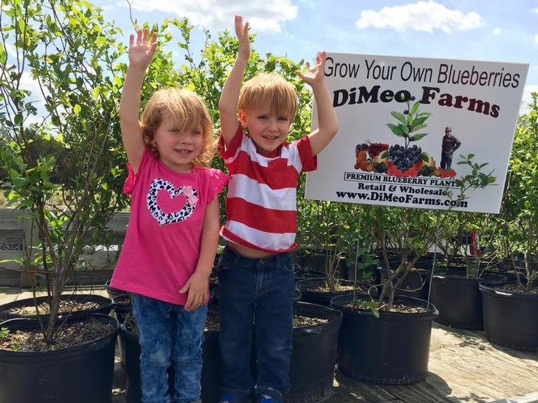 DiMeo Farms & Blueberry Plants Nursery - DiMeo Farms sells the best Non-GMO, NATURALLY GROWN, Heirloom Blueberry Bushes shipped direct to your door or pick-up at our family blueberry farm in New Jersey. CALL: (609) 561-5905. One call. All your answers.