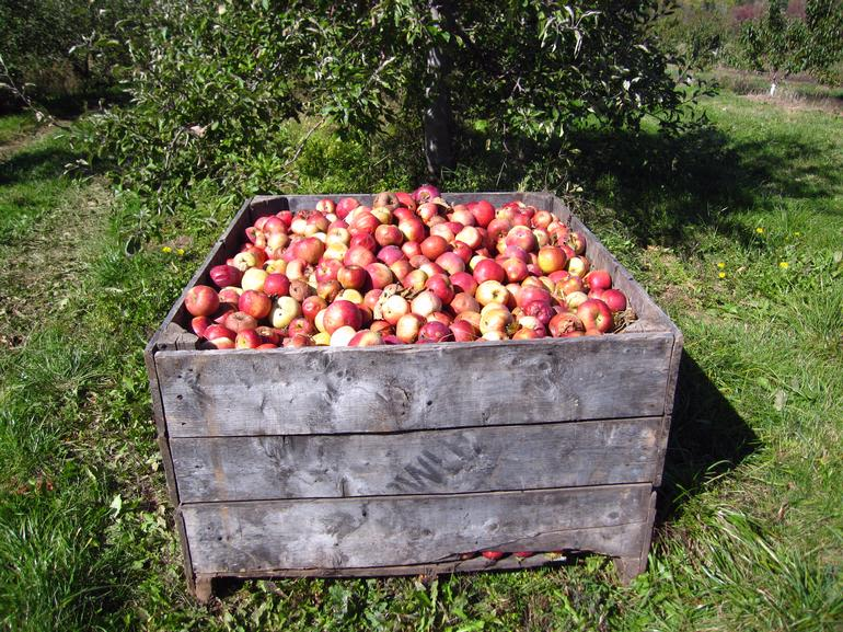 Dempsey Corner Orchards Farm Market  & U-Pick - Image 1