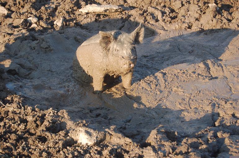 Alverstoke farm B&B - Who's on bathing duty ?