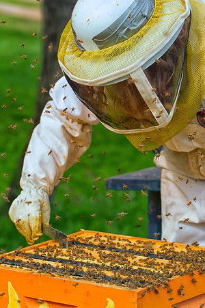 Smaht Fahm - Working our chemical free beehives