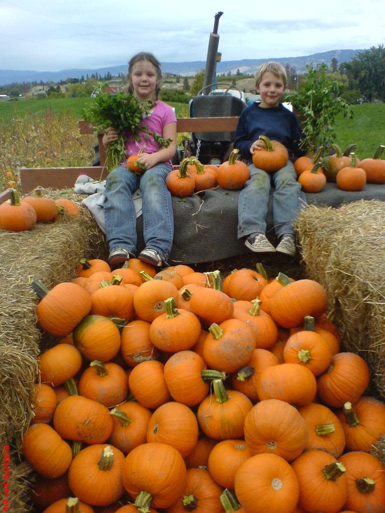 McMillan Farms - A hayride with a load of pumpkins.