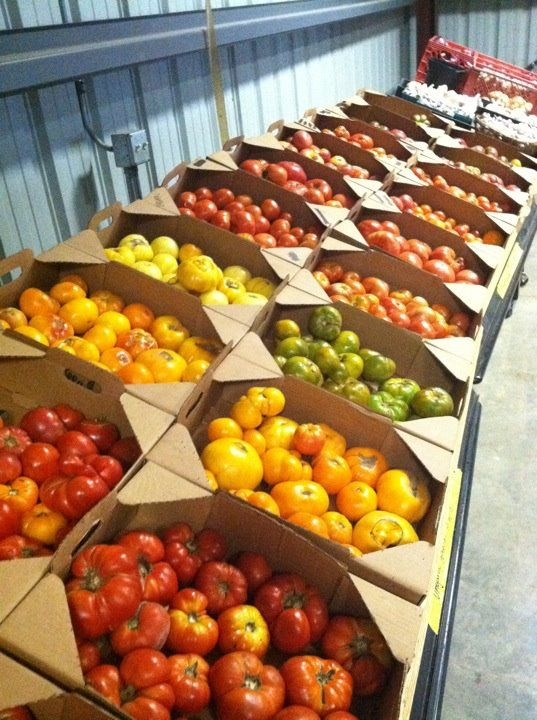 Bella Organic Farm - Image 16