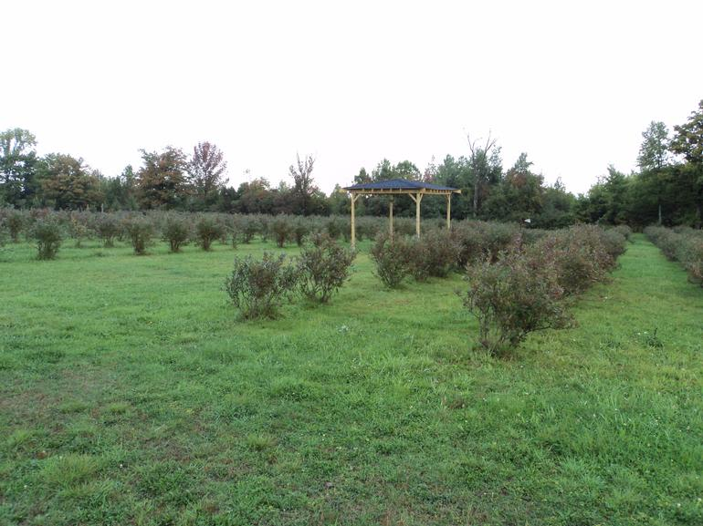 The Blueberry Patch - Image 1