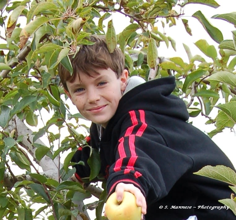 Prospect Hill Orchards-Apples - Image 1