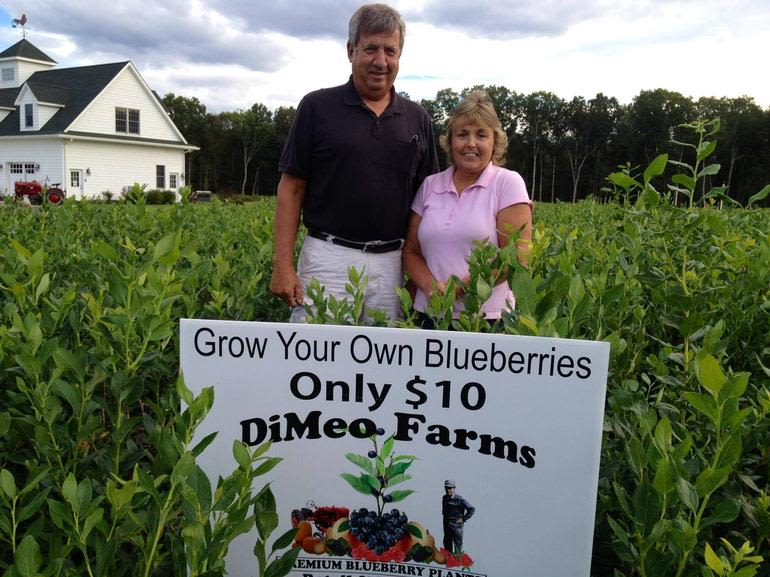 DiMeo Farms & Blueberry Plants Nursery - More happy customers buying Heirloom blueberry bushes to start their own blueberry patch for an additional retirement income idea. They were a referral from another customer who bought Non-GMO, NATURALLY GROWN bearing-size blueberry plants from DiMeo Farms in Hammonton.