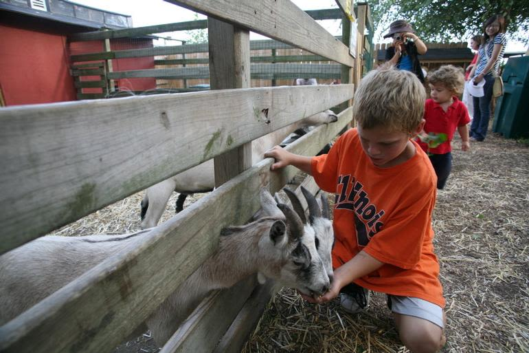 Curtis Orchard & Pumpkin Patch - Help feed our goats, relax, and spend some time in the country.