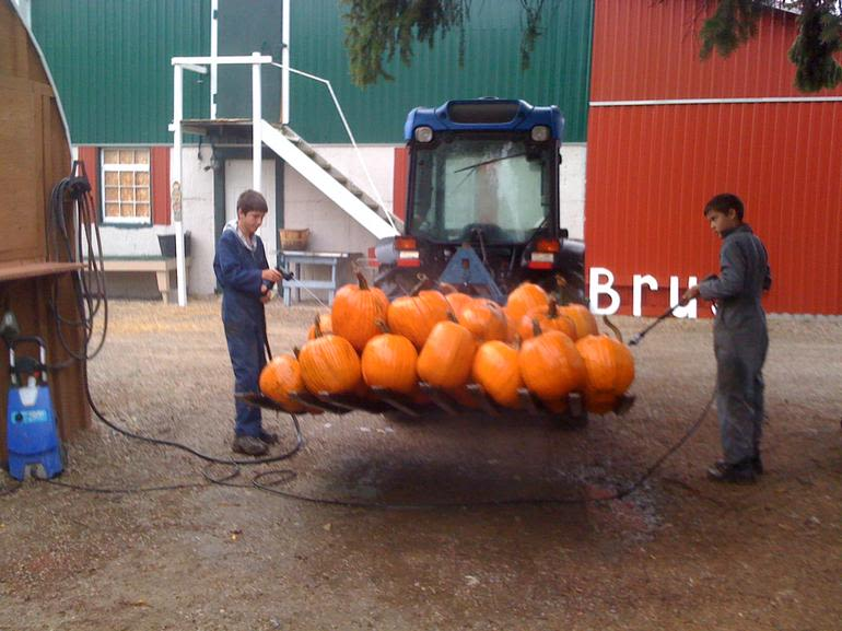 Brus' Orchards & Winery - cleaning the pumpkins
