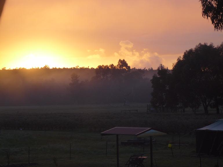 Collie Blueberry Farm - Looking over the caravan park and orchard at a winer sunrise.