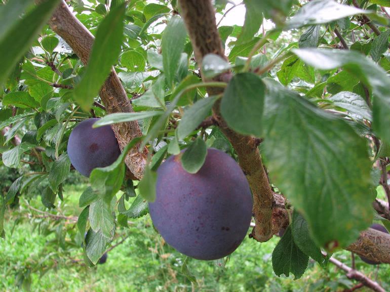 Dempsey Corner Orchards Farm Market  & U-Pick - Image 4